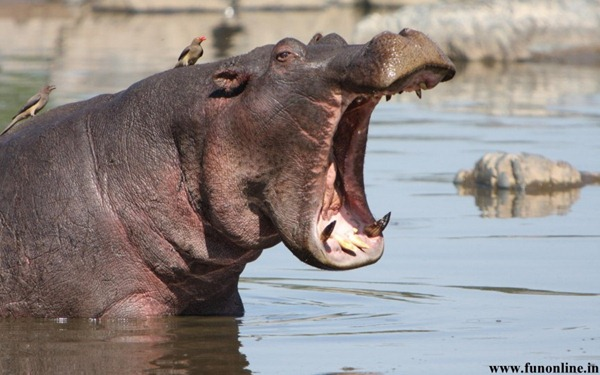 世界上排名前10的危险动物是什么?