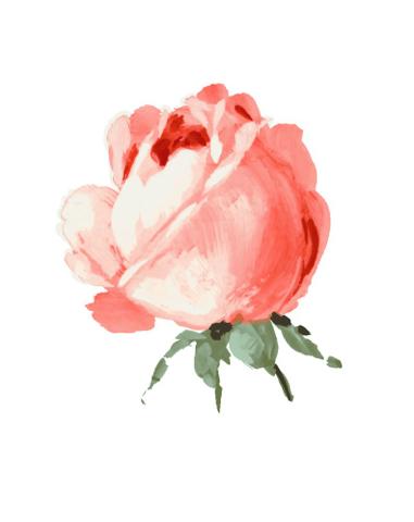 还有水粉玫瑰步骤图.