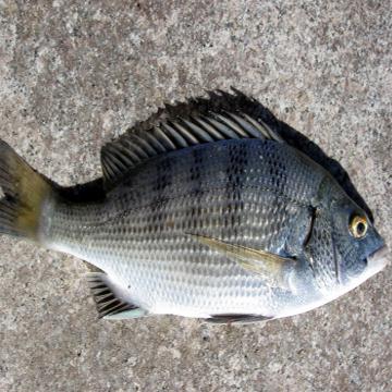 鱼高清头像