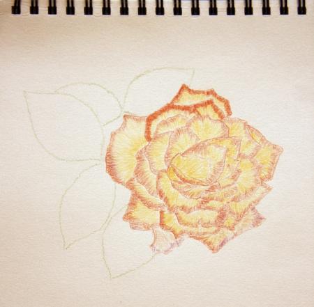 彩铅手绘花朵怎么画?工具要什么?