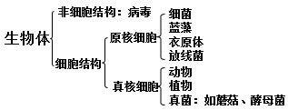 必修一 生物细胞知识树状图形式的总框图图片