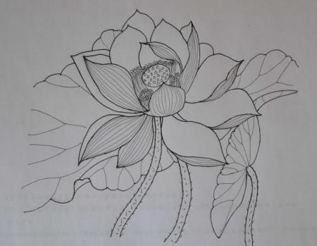 铅笔画如何画花