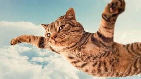 为什么猫在7楼跳下最危险,超过7楼反而更安全?
