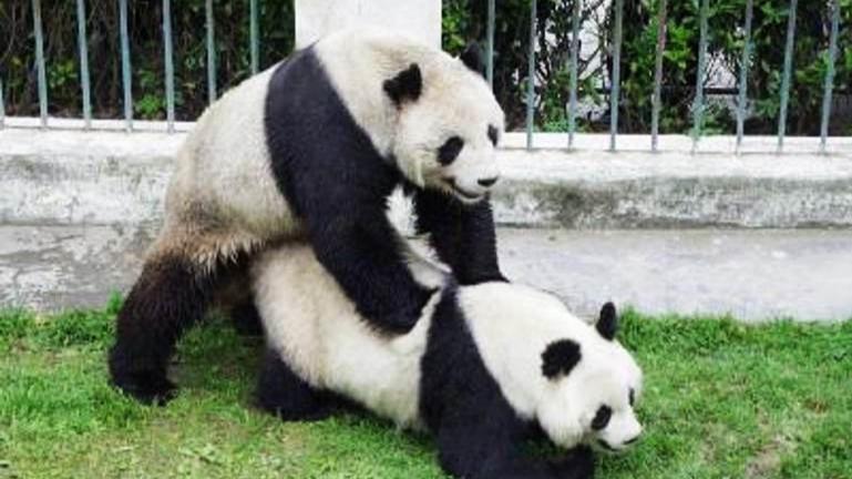 为什么动物也喜欢围观香艳场景?