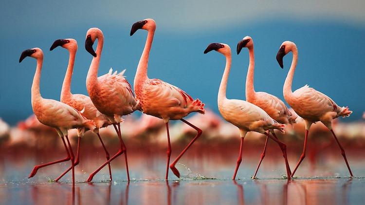 武力VS生殖力,两栖类、灵长类、鸟类为什么有不同的取舍?的头图
