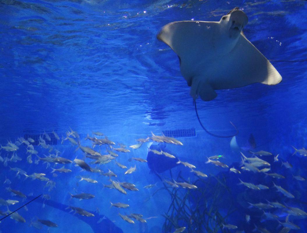 壁纸 海底 海底世界 海洋馆 水族馆 桌面 1054_800