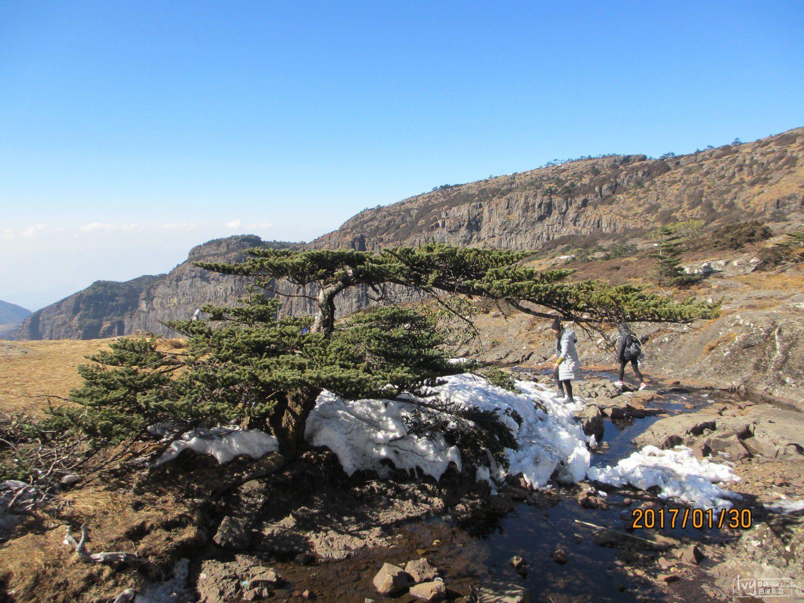 云南省乌蒙娇子雪山,东川红土地,弥勒2017年二月郁金香