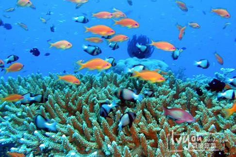 赏鸟观鱼vs海钓浮潜,西沙群岛让你流连忘返