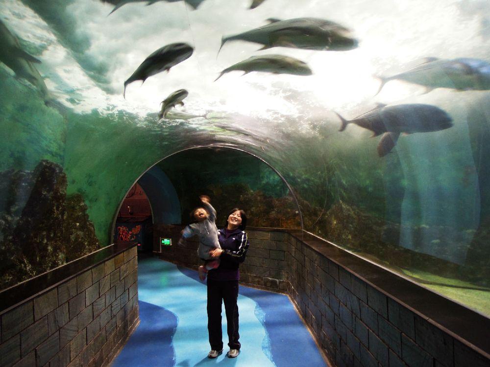 """经过水族馆来到""""海底隧道""""海底步道长约30米,在这里从隧道仰望海底"""