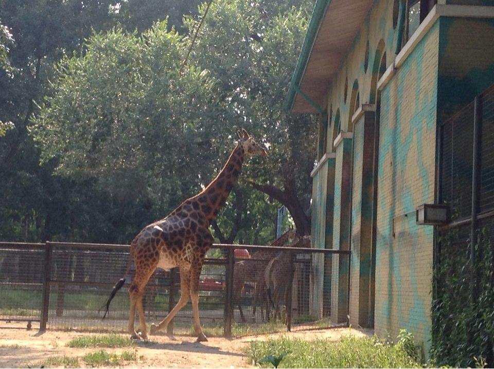 夏天的北京动物园