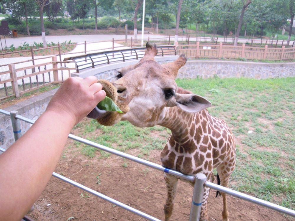石家庄动物园,华北最好的动物园!