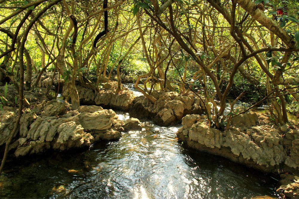 水中森林,或称石上森林图片图片