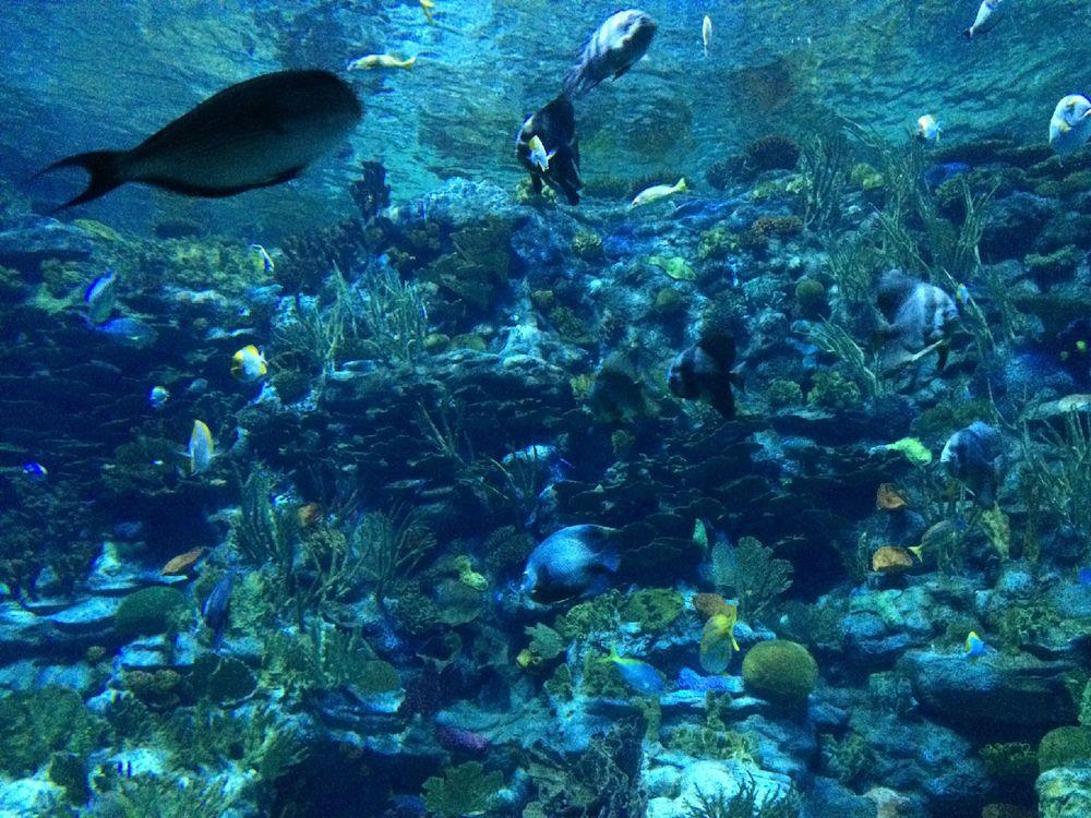 壁纸 海底 海底世界 海洋馆 水族馆 桌面 1000_750