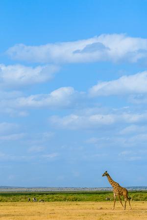 非洲风景竖屏壁纸图片