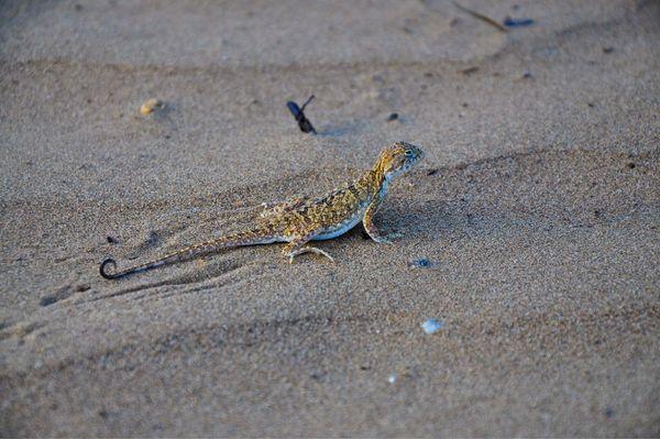 沙漠里的小动物都是抗旱高手图片