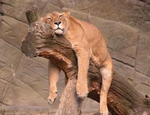 什么动物睡觉很特别
