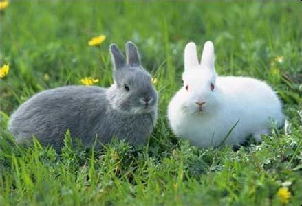 灰兔子画画图片