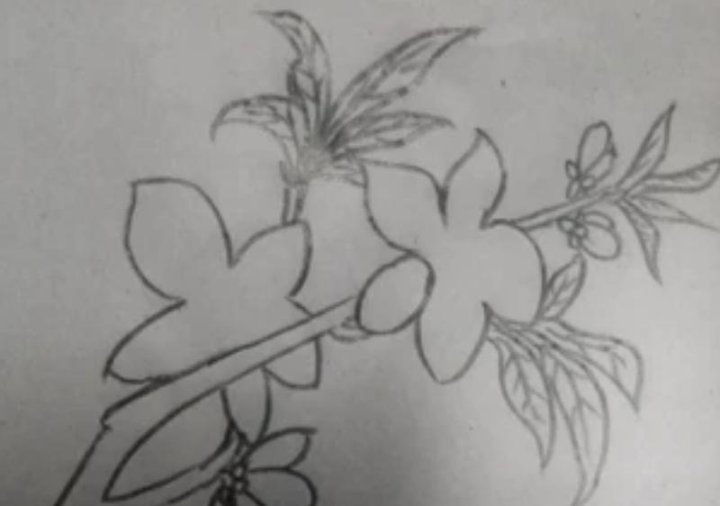 怎么画桃花(铅笔画)简笔画图片