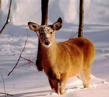 有一种国家保护动物,头长得像电影里成龙演的十二生肖