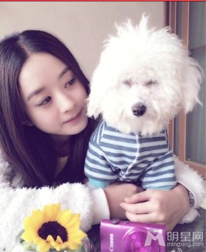 赵丽颖在家里抱小狗的照片穿灰色