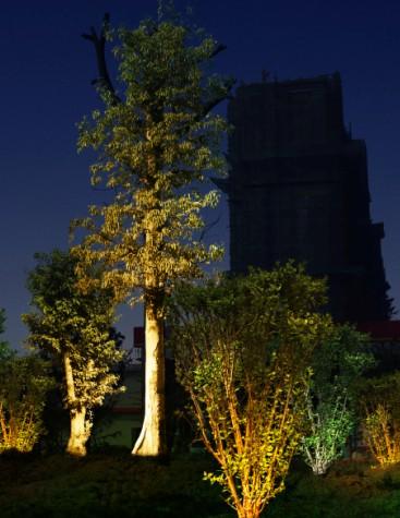 各位步骤,请教一下,v步骤效果视频,照明这种明暗高手的花篮树叶图片