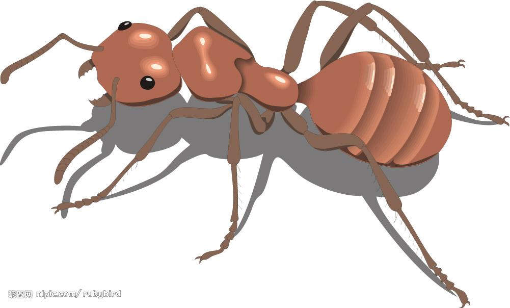 蚂蚁吃什么