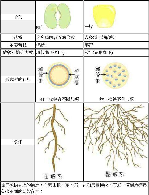 双子叶,单子叶,裸子植物的区别