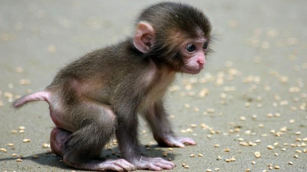 可爱猴子的图片