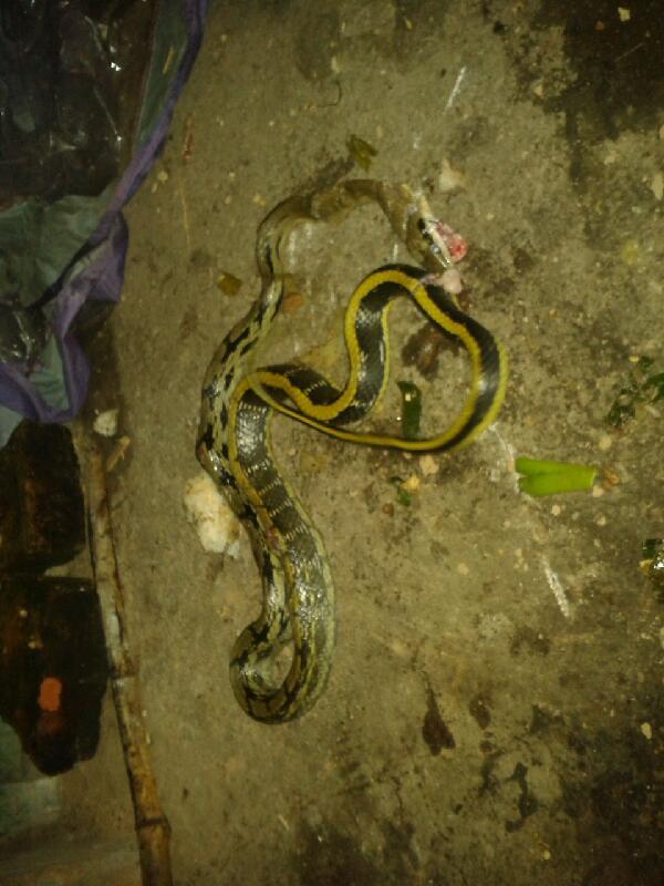 这是什么蛇