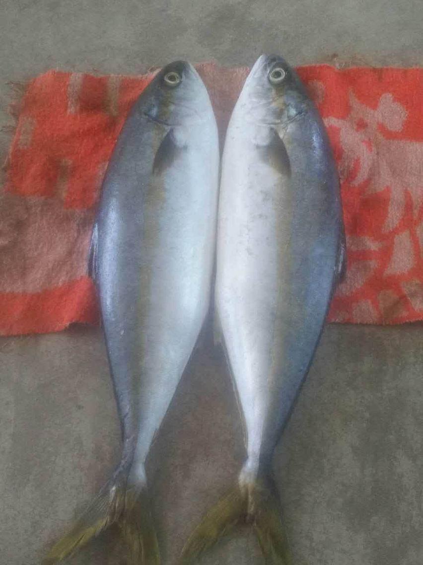 这是什么鱼?海里面的