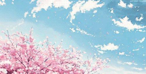 求高清樱花动漫背景图,急!