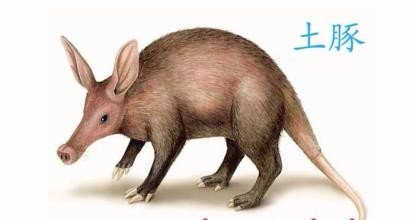 """""""土豚""""在非洲语中意思是""""土猪"""" 追问 不是非洲动物吗 怎么中国也有 追"""