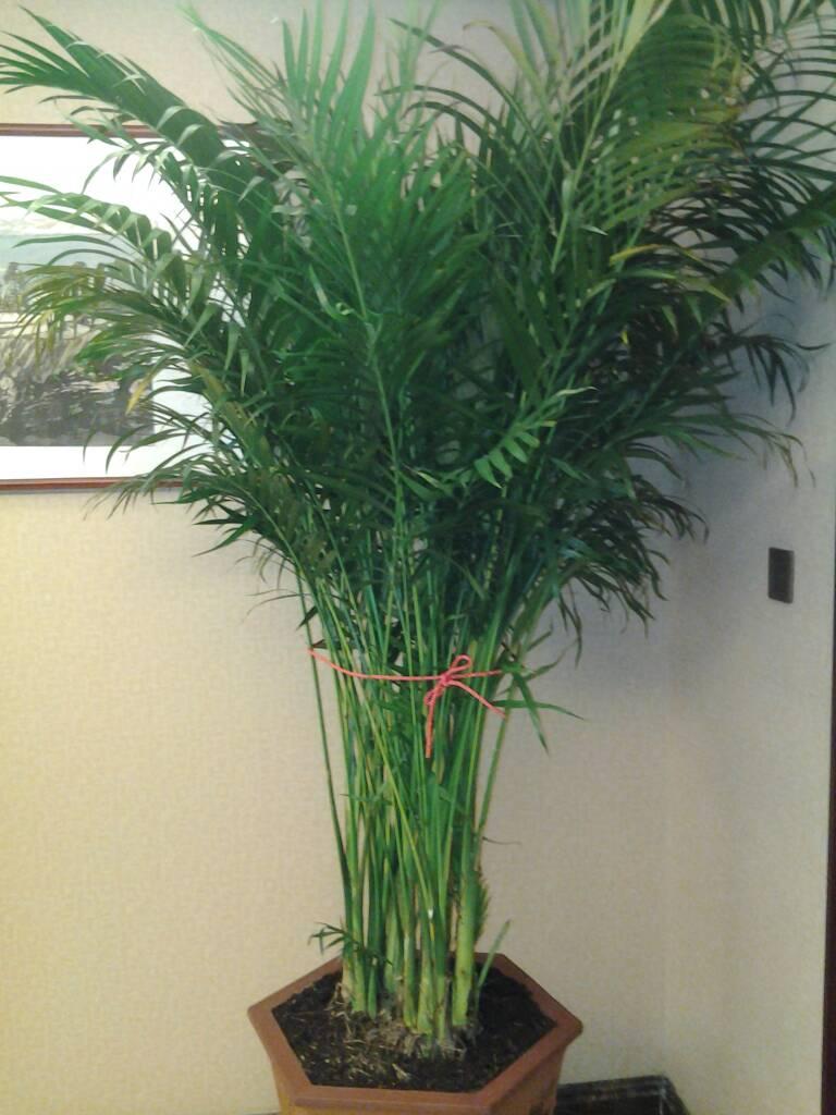 请问亲爱的网友:图片上的竹子叫什么?
