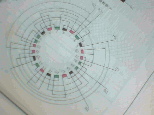 双速电机绕组54槽6/8极 2y/y接线图