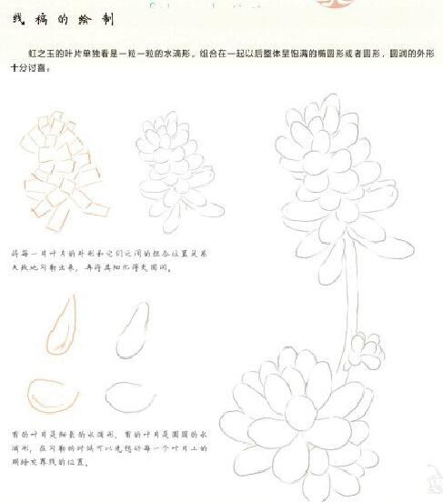 多肉植物的绘画方式很多样,下面向你推荐一种简单的方法,彩色铅笔画