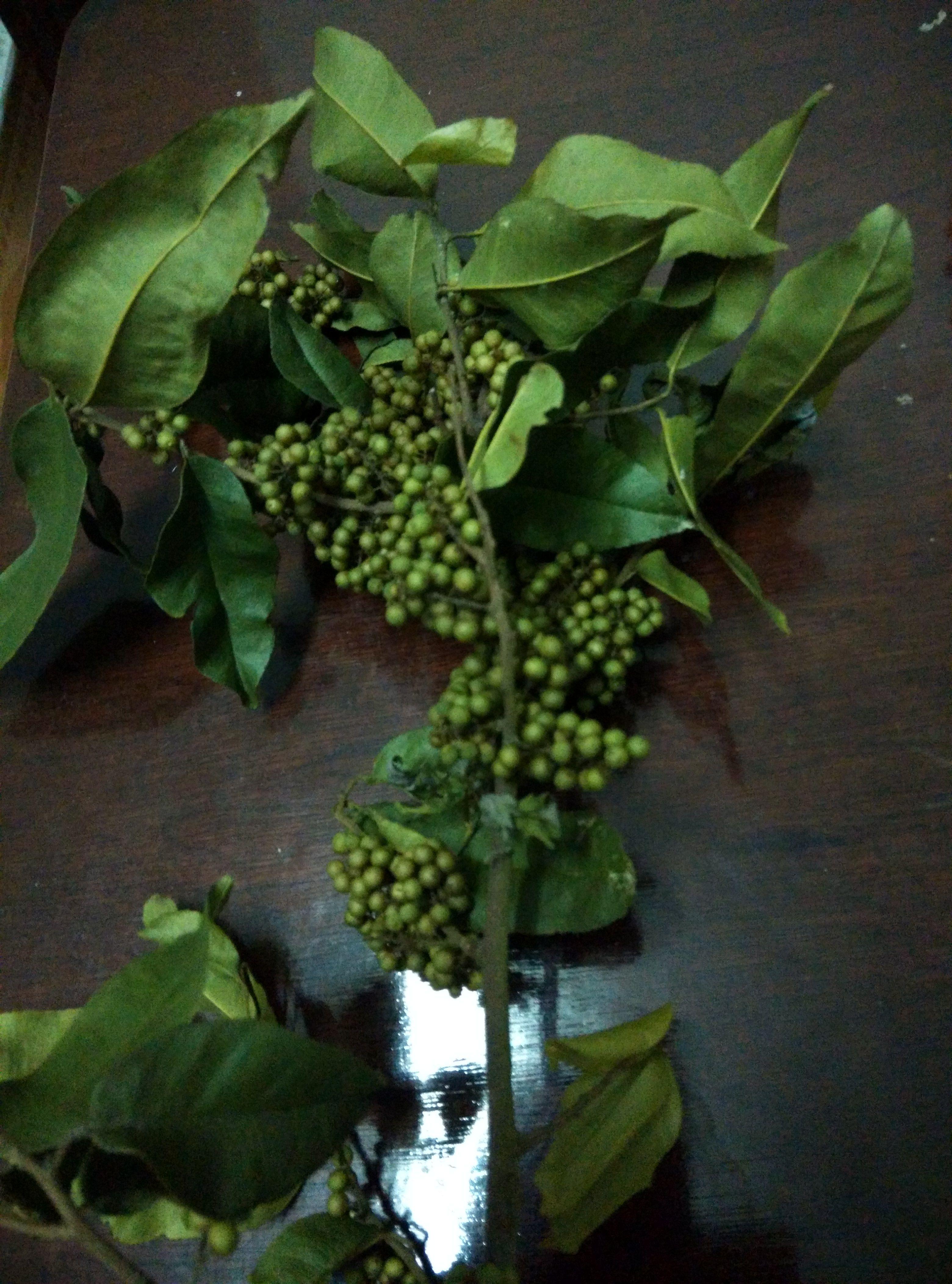 绿豆植物成长记录图片