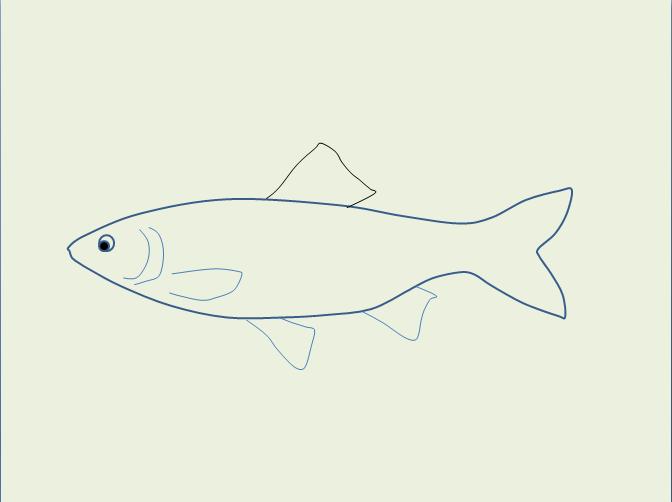 怎样画鱼图片大全步骤