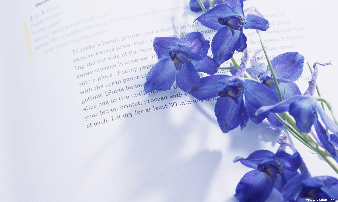 寻漂亮的紫罗兰花图片,一定要漂亮的!