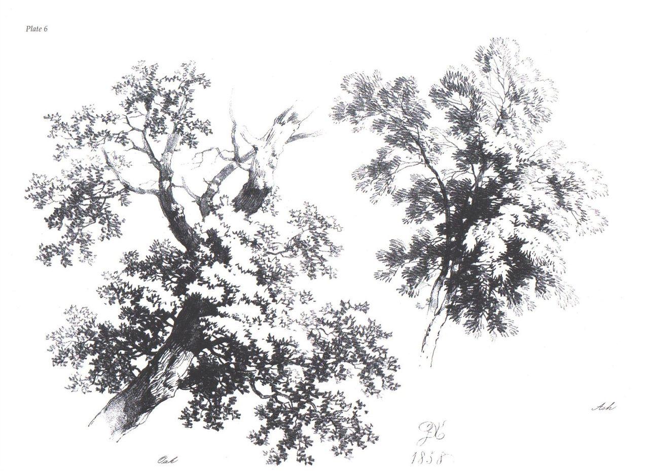 树图片手绘素描