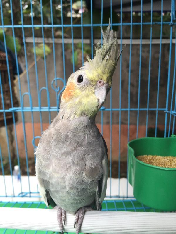 鹦鹉是什么名字?会说话吗?图片