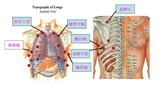 肺部听诊:按锁骨中线,腋前线,腋中线三条线,上,中,下三个部位左右