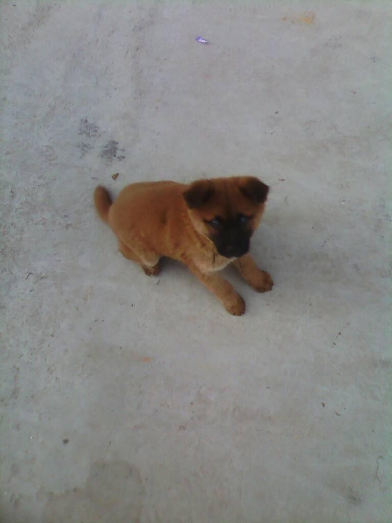 这是什么狗啊?真的好可爱