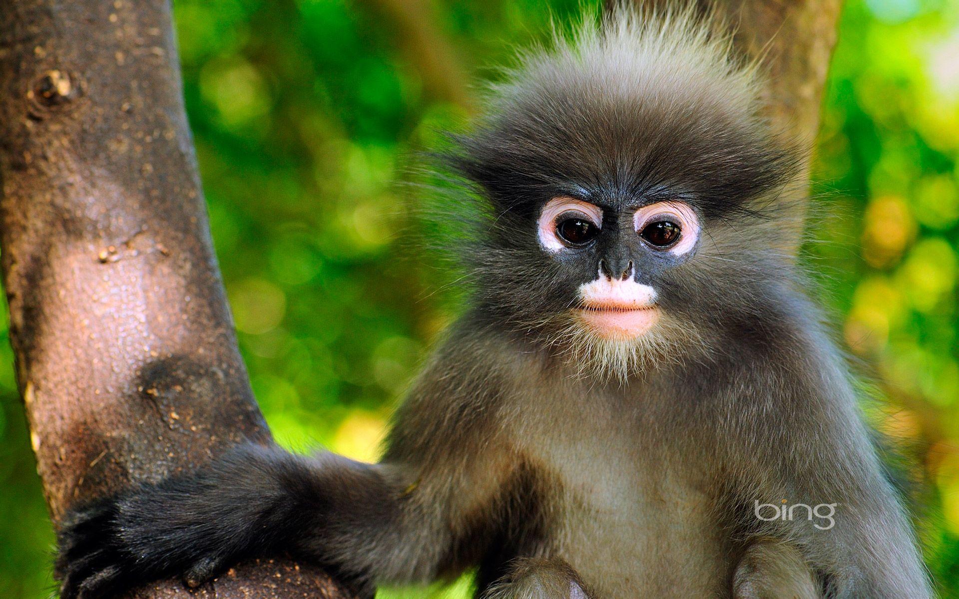 猴子是什么原因_这是什么猴子?