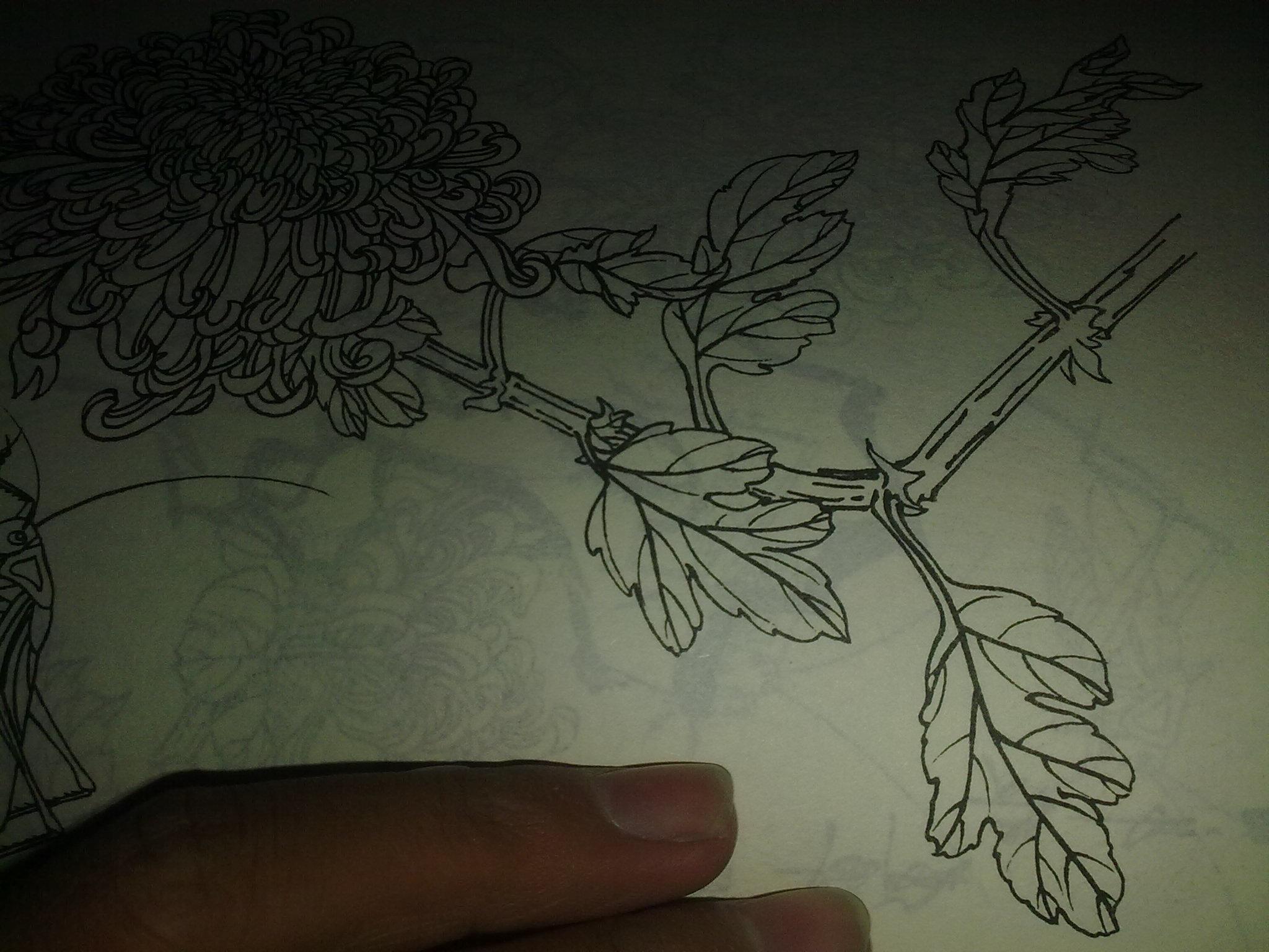 求 玉雕 翡翠花件 素面 (主要:叶子 ,灵芝)等简单设计画法图 要求能