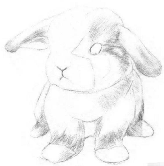 画兔子步骤: 1,轻轻地打形,大致区分出脑袋,身子和四肢,加上一对长