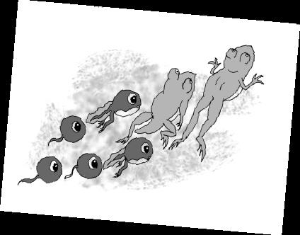 小蝌蚪变成青蛙要一个月左右,青蛙在水边产卵后,经过一段时间,卵就会图片