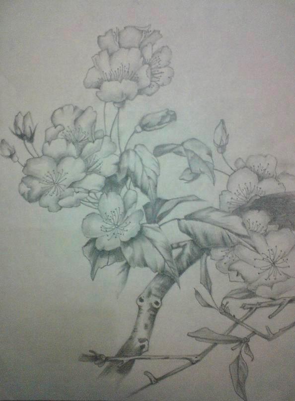 好看的铅笔画花朵