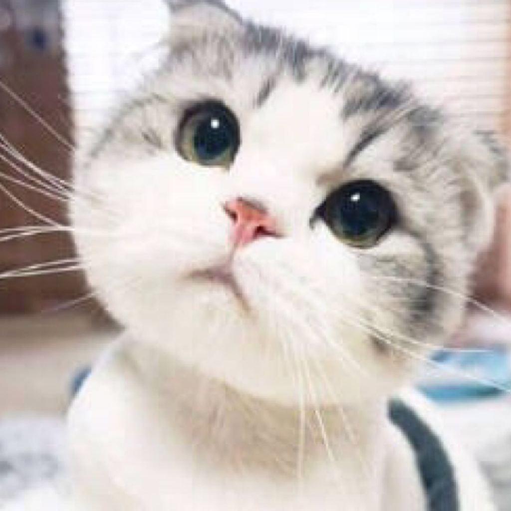 可爱白猫图片就是这种白猫