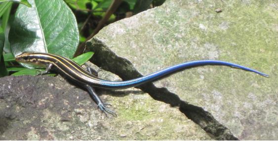 这个小动物是蜥蜴么?
