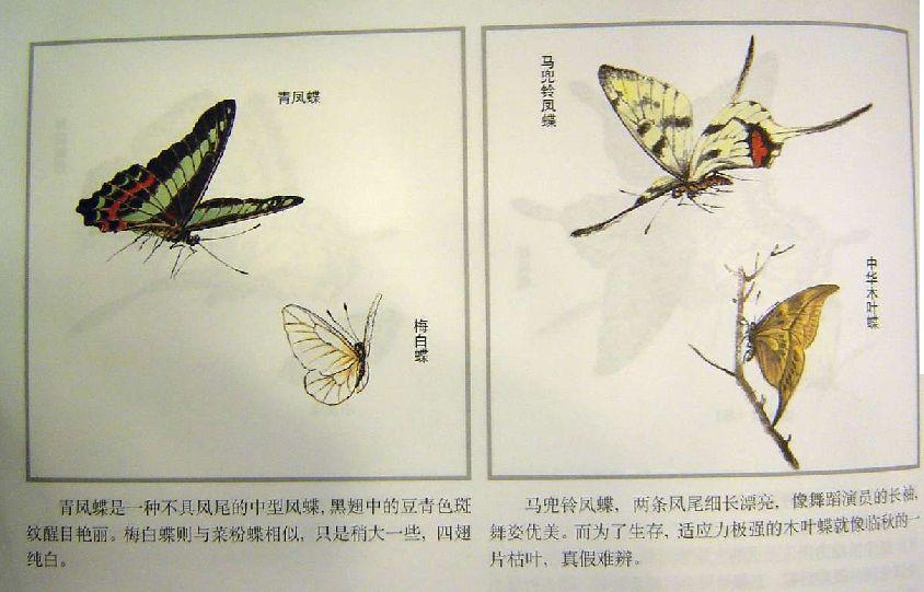 怎样画工笔蝴蝶